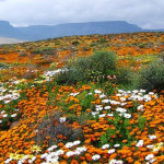 Flower Season | The Island View House | Upington Accommodation